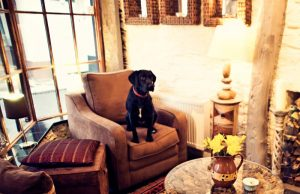 Dog Friendly Hotel Dartmouth